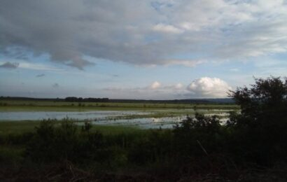 poplavljen rit titel